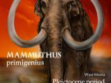 Амулеты Сибири. Фрагмент бивня мамонта в магазине сувениров в Тюмени